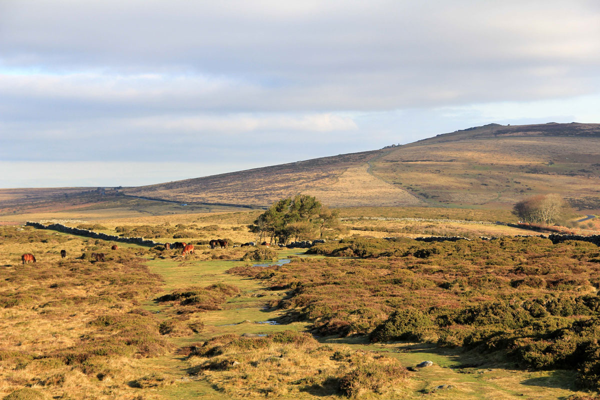 Rippon Tor from Buckland Beacon