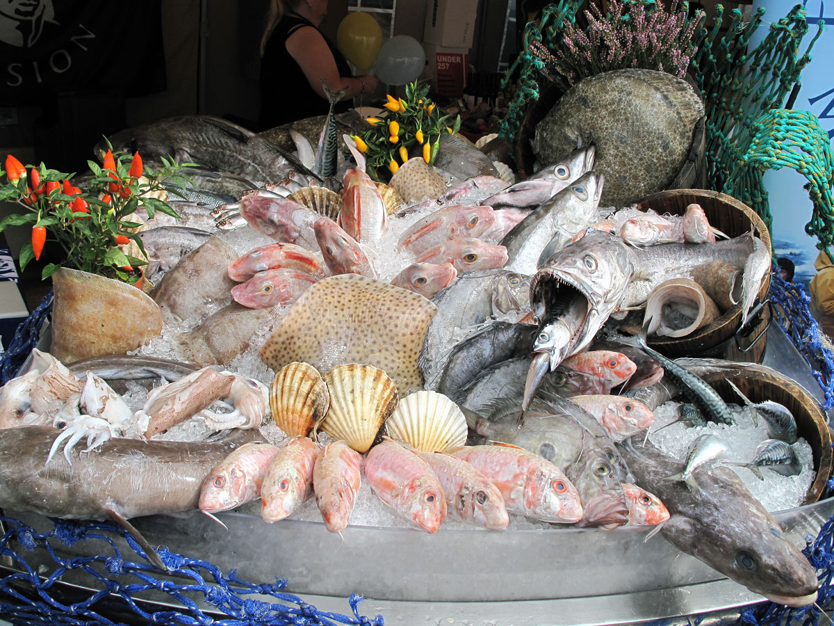 A Display of Brixham Fish