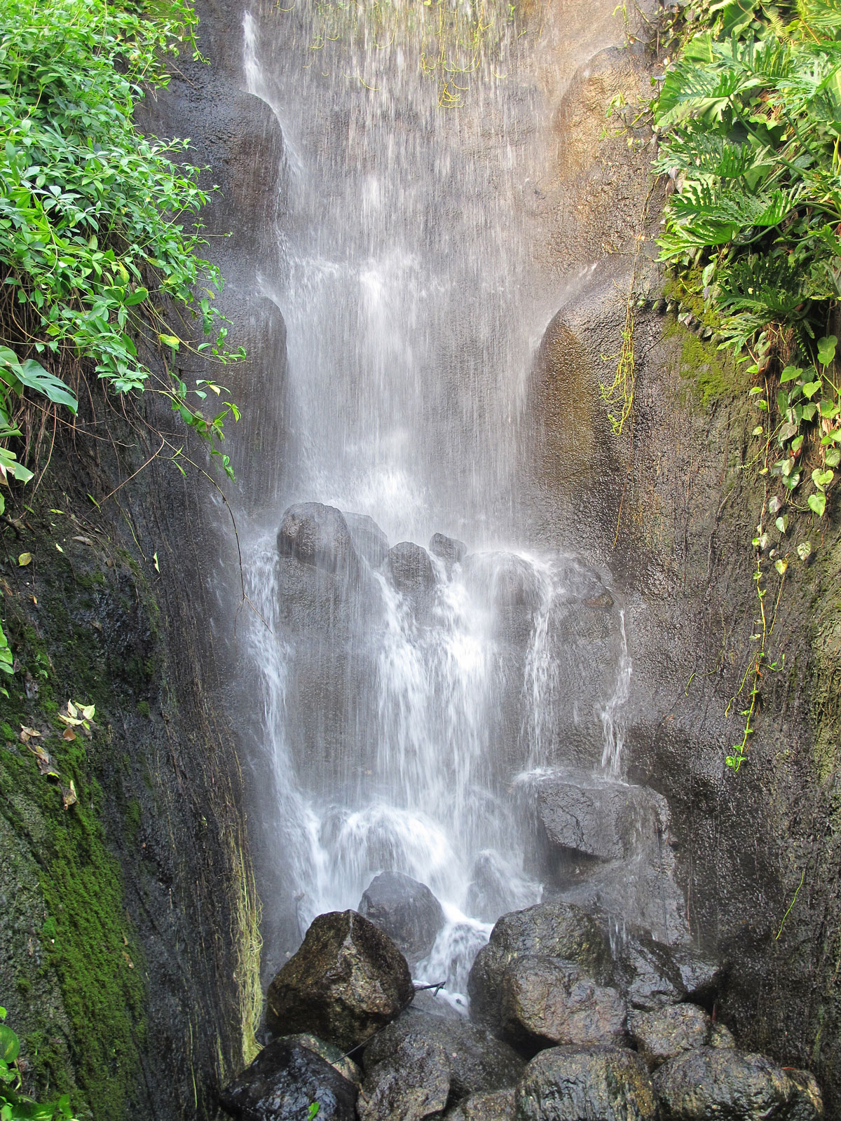 Tropical South America